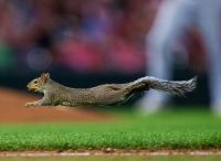 A squirrel runs across the field in the 5th inning of the game between  Minnesota Twins and Chicago White Sox at Target Field