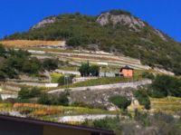 Vine terraces, Switzerland