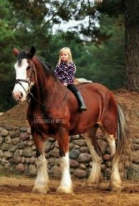 HORSE LOVERS COME IN ALL SIZES
