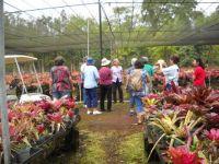 Visit to the bromeliad nursery
