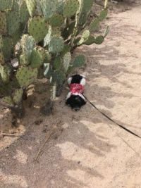Charlee finds shade in the dessert