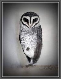 One Legged Owl!