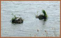 Eenden op het water.