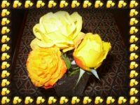 Yellow trio . . . . .