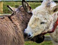 Isle of Wight Donkey Sanctuary in England.