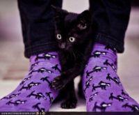 kitti socks with a kitty
