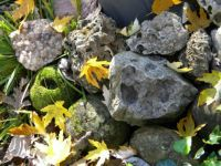 Rocks And Autumn Leaves  2