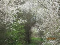 When our path to the forest blooms - for you Nev ☺