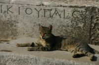 A Turkish Kitty in Ephesus