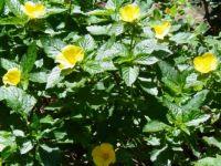 Yellow is the Word - Maui, Hawaii