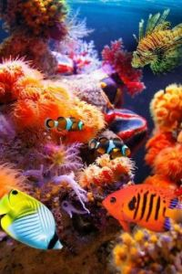 COLORFUL UNDER THE SEA