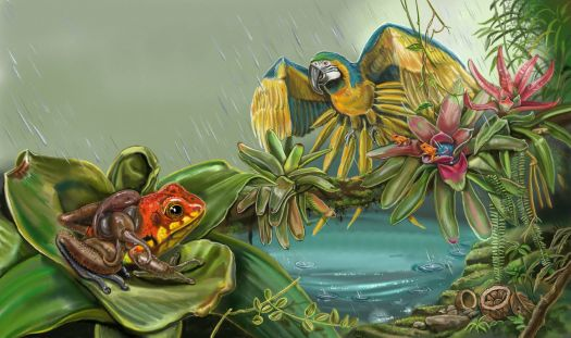 Nature Recycles Frogs with Rain