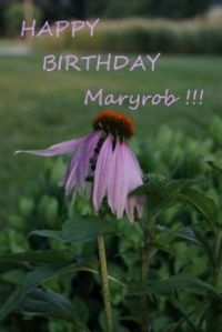 HAPPY BIRTHDAY, Maryrob!!!