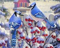 Winter Blue Jays (not sure of artist)