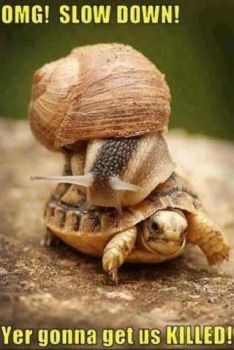 'A speed demon..!!'