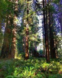 Redwood Forest National Park pix