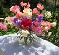 Sweet peas and miniature carnations from my garden