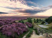 Purple ocean post by jujuba