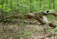 Fallen Tree by the Trail