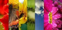 rainbow_by_JustaPanda