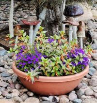 Spring Flower Bowl