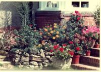 Lovely Garden Pots of Flowers