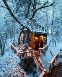 Treehouse in Maine