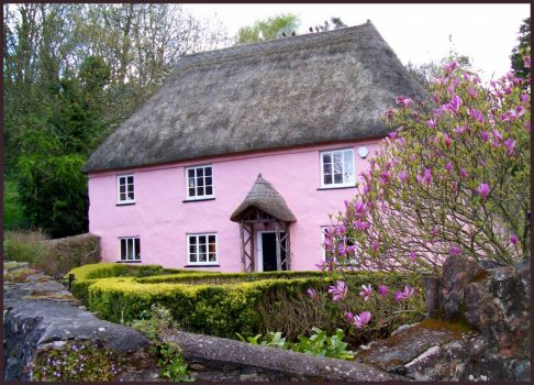 Lovely pink cottage in Cockington
