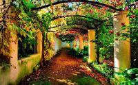 Vine Walkway