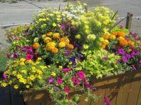 flowers in Twillingate. NL