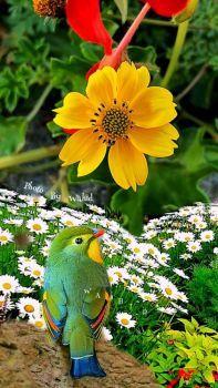 Nature!
