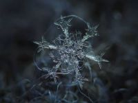 Micro snowflake4