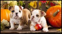 Pups and pumpkins