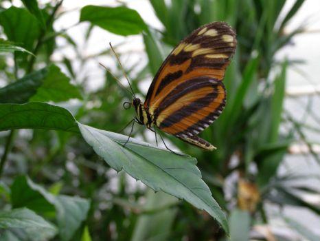 Motýlí pozdrav