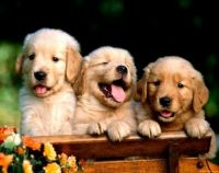 puppies 493553