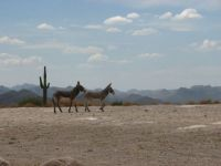 Arizona Burros