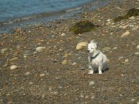 Reg at the beach