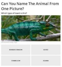 Can you name the animal? #23 of 40