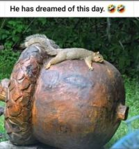 He has dreamed of this day :-)