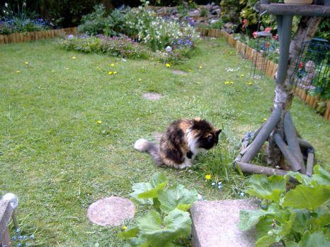 Garden - Tasha Cat