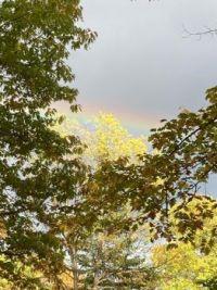Fall 88 (bonus rainbow)