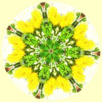 Floral Green And Yellow