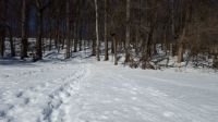 Winter Hiking in Valley Forge National Park