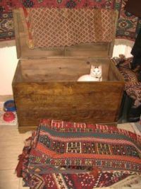 cat and kilims