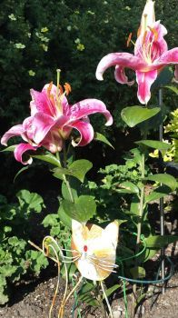 Stargazer lily and cat
