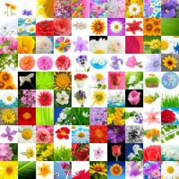 big-collection-of-flowers-