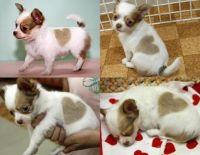 Heart Puppy!