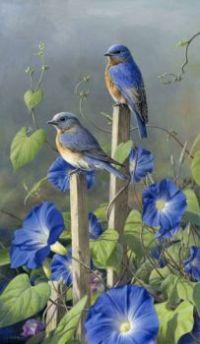 bluebird_glories