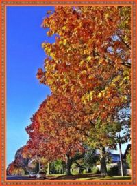 Autumn leaves on the trees in Taupahi Road.