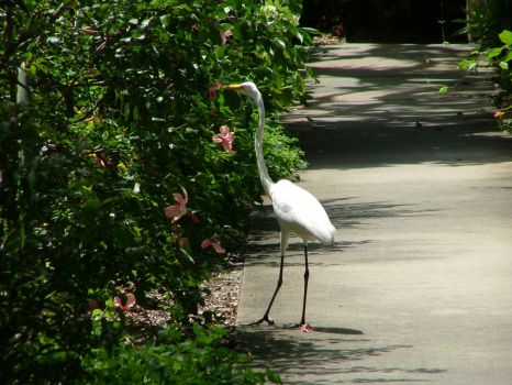Selby Gardens 033